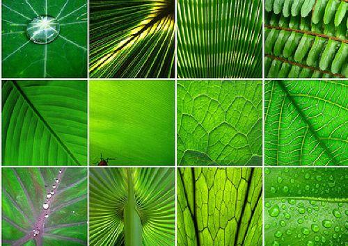 Green_en9